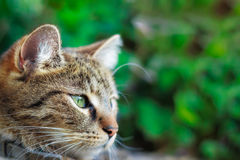 Katze, die rechts schaut Stockbild