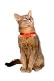 Katze, die rotes Inneres trägt Stockfoto