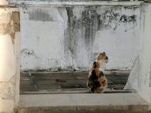 Katze, die ruhig auf Tempeltreppe sitzt stockfoto