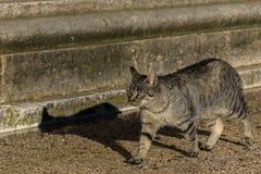 Katze, die ruhig in den Garten geht lizenzfreie stockfotografie