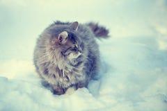 Katze, die in Schnee geht Stockfoto