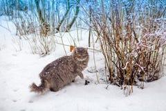 Katze, die in Schnee geht Stockfotografie