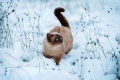 Katze, die in Schnee geht Lizenzfreie Stockfotos
