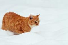 Katze, die in Schnee geht Lizenzfreie Stockfotografie