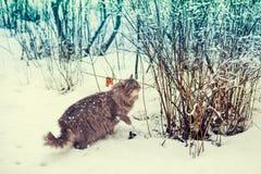 Katze, die in Schnee geht Stockbild