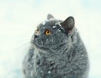 Katze, die in Schnee geht Stockfotos