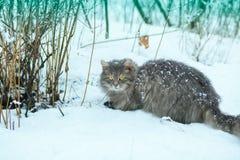 Katze, die in Schnee geht Lizenzfreies Stockbild