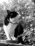 Katze, die seine Mahlzeit schützt Stockbild