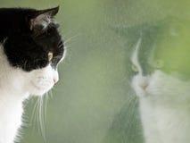Katze, die seine Reflexion betrachtet Lizenzfreie Stockfotografie