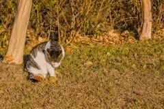 Katze, die seine Tatze im vorderen Baum säubert Stockfoto