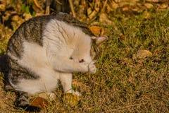 Katze, die seine Tatze im vorderen Baum säubert Stockfotos