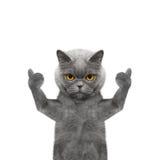 Katze, die sich Daumen und Willkommen zeigt -- Isolat auf weißem Hintergrund Stockfotografie