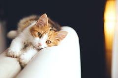 Katze, die sich zu Hause entspannt lizenzfreies stockfoto