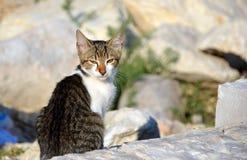 Katze, die Sie betrachtet und auf den Steinen sitzt Stockbilder