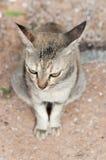 Katze, die an sitzt Stockfotos