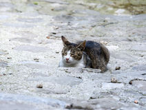 Katze, die in Toskana (Italien, schläft) lizenzfreie stockbilder