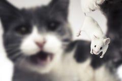 Katze, die ungefähr eine Maus anhält, um sie zu essen Lizenzfreie Stockfotos