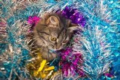 Katze, die unten im Lametta schaut Lizenzfreie Stockbilder
