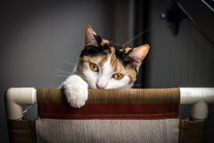 Katze, die unten schaut Stockfotografie