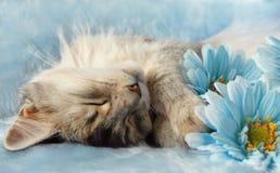 Katze, die unter Blumen schläft Lizenzfreie Stockfotos