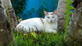 Katze, die unter Palmen im Garten am Nachmittag liegt stockfotos