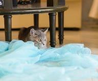 Katze, die unter Tabelle sitzt Stockfotografie