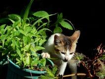 Katze, die Verstecken spielt Lizenzfreies Stockfoto