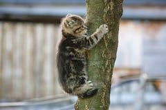 Katze, die versucht, einen Baum zu klettern Stockbilder