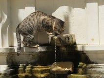 Katze, die vom Brunnen trinkt Stockbild