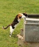 Katze, die von einem Wasserkolben trinkt Lizenzfreie Stockfotografie