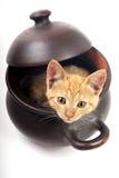 Katze, die von einer Lehmwanne schaut Stockbild