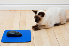 Katze, die vor Computer-Maus sitzt Stockfotos