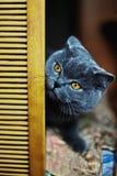 Katze, die vorsichtig auf das Bett späht Lizenzfreies Stockfoto