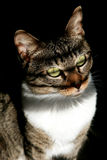 Katze, die warmes Tageslicht genießt Stockfotos