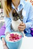 Katze, die weg von der Kamera schaut Blondes Mädchen in der Jeansjacke, die ein Haustier hält und blaue Schale Schaum schmecken C Stockfotografie