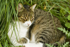 Katze, die Wintersonne genießt Lizenzfreies Stockfoto