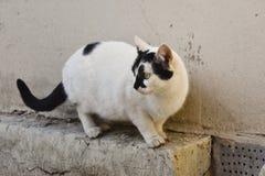 Katze, die zu den Vögeln schaut Lizenzfreie Stockfotos