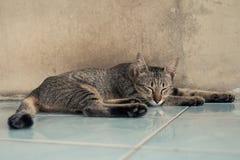 Katze, die zu Hause auf dem Boden schläft Stockfotos