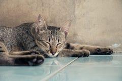 Katze, die zu Hause auf dem Boden schläft Stockbilder