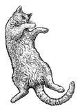 Katze, die zurück auf ihre Illustration, Zeichnung, Stich, Tinte, Linie Kunst, Vektor legt Stockbild