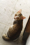 Katze, die zurück schaut Stockfotos