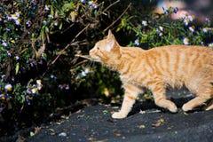 Katze draußen Stockfoto