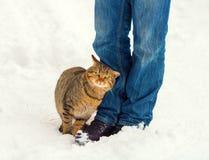 Katze draußen im Winter Stockfotografie