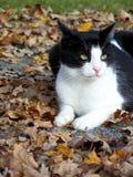 Katze draußen mit Fallblättern Lizenzfreies Stockfoto