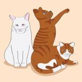 Katze drei nett Stockfotos
