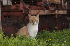 Katze durch alte rostige Scheibe Lizenzfreies Stockbild