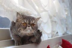 Katze durch das Fenster. Stockfoto