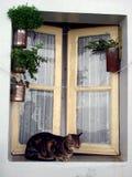 Katze durch das Fenster Stockbild