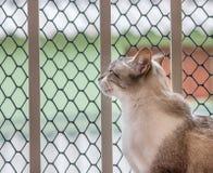 Katze durch ein Balkon ` s Fenster Stockfotos