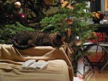 Katze durch Weihnachtsbaum stockbilder